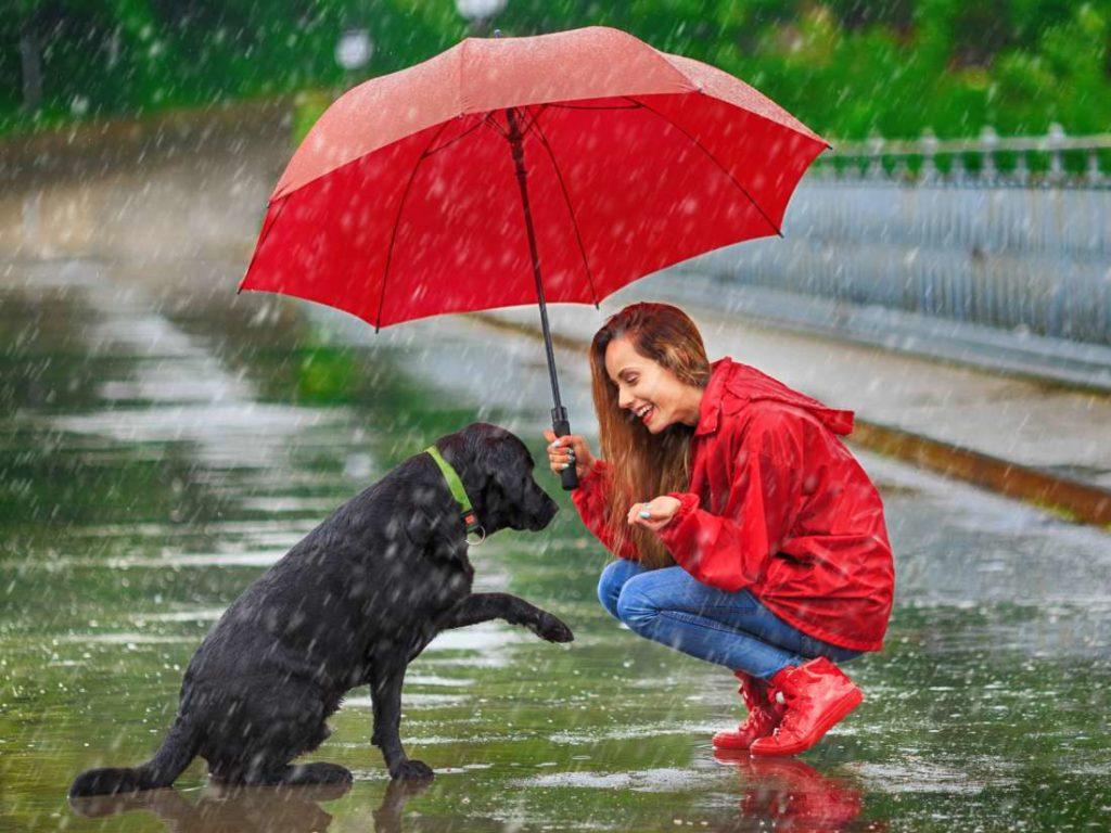 24 saat yağmur sesi dinleme sitesi